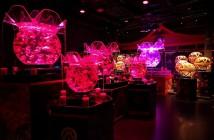 Visite de l'Art Aquarium Museum