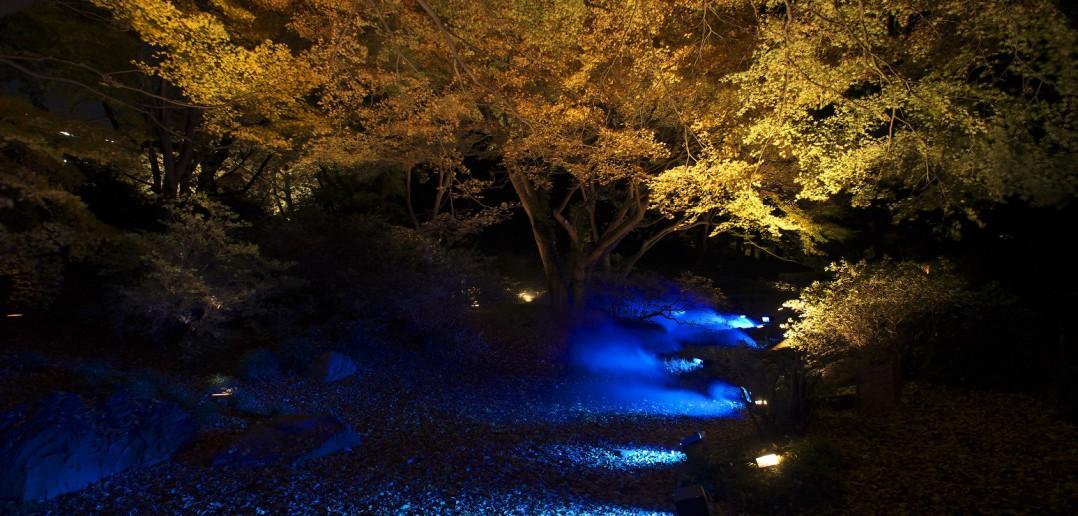 Rikugien les feuilles d'automne (article par amuzen)