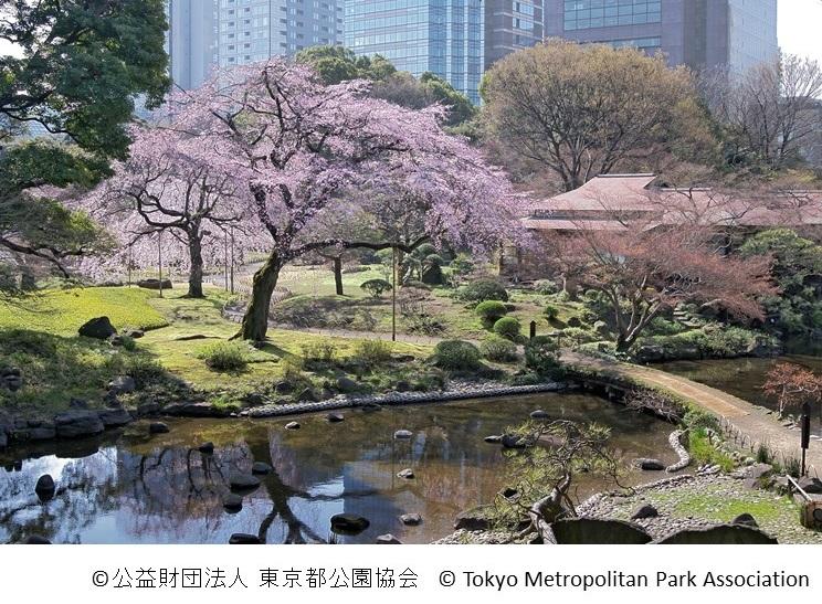 Koishikawa Korakuen: Cherry blossoms & hanami 2016 (article by amuzen)