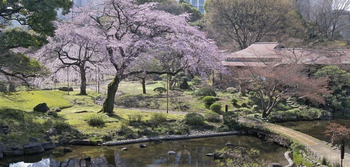 Koishikawa Korakuen: Cherry blossoms & hanami 2016 (article by amuzen) fr