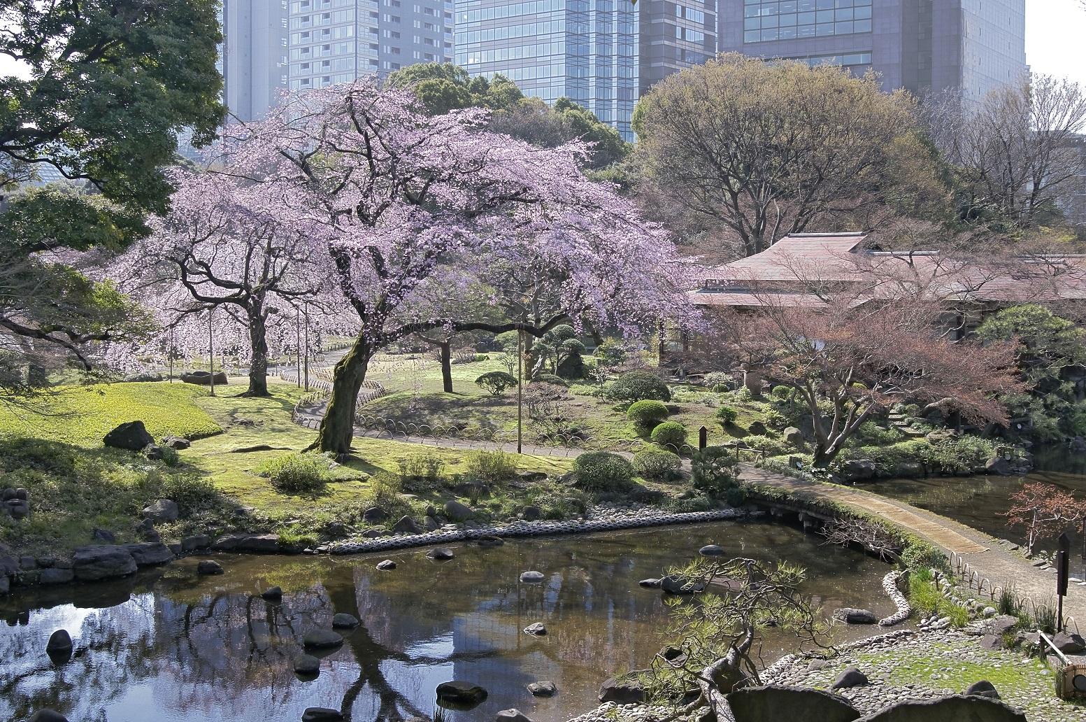 Le jardin historique teint en couleur douce du printemps for Jardin korakuen