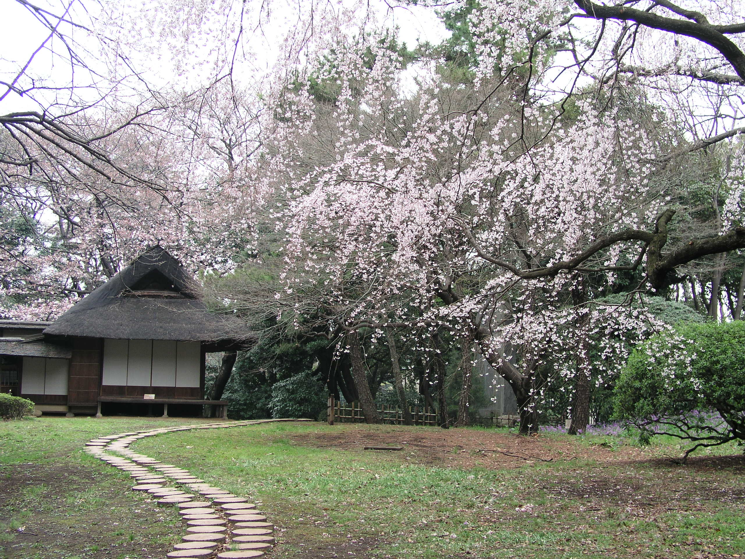Spring time Opening of the Museum Garden © Le Musée National de Tokyo