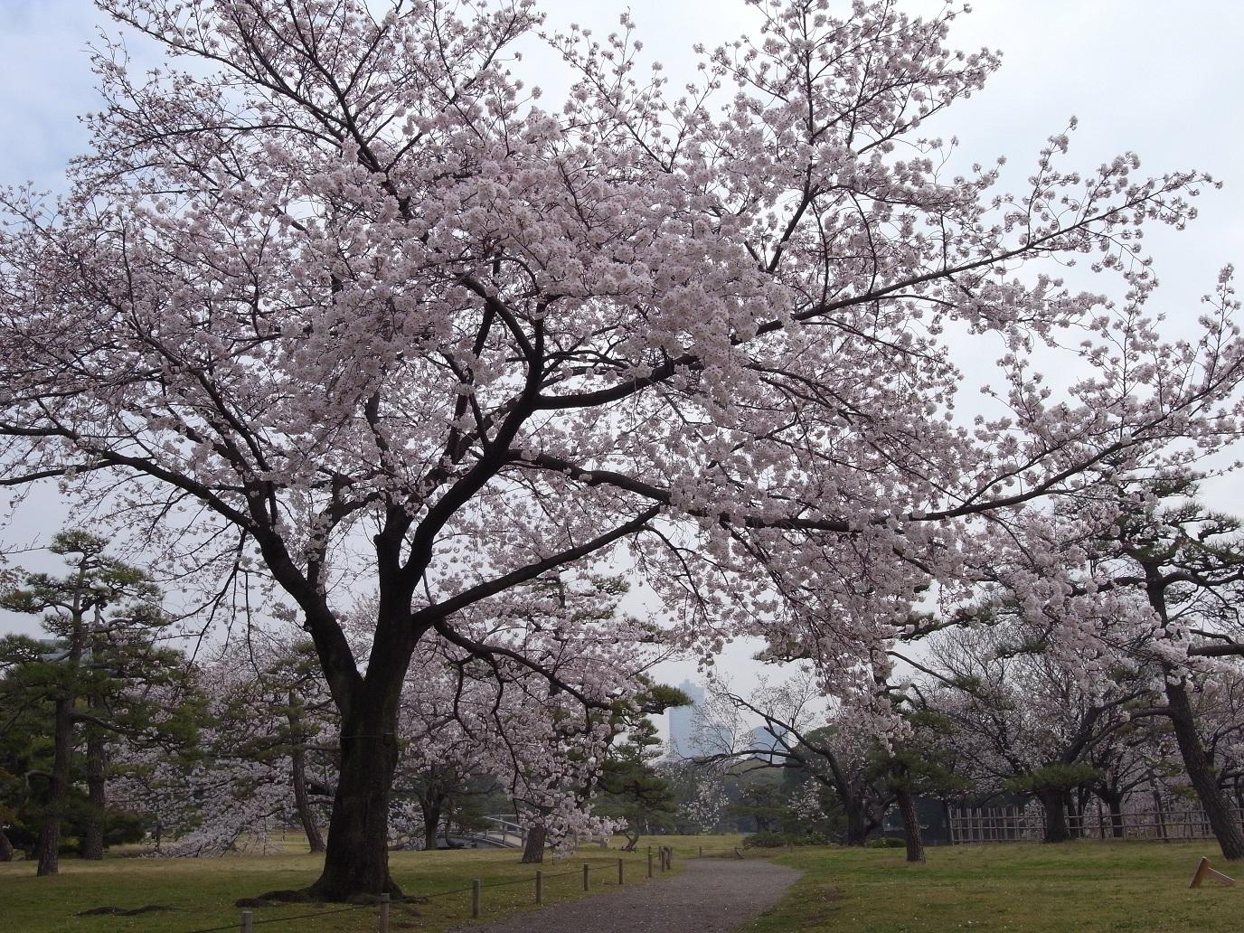 Tokyo Metropolitan Park Association