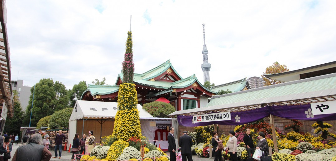 Festival des Chrysanthèmes 2016 au Kameido Tenjin-sha (article d'amuzen)