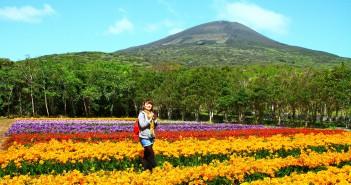Festival de Freesia 2017 à l'île de Hachijo-jima (article d'amuzen)