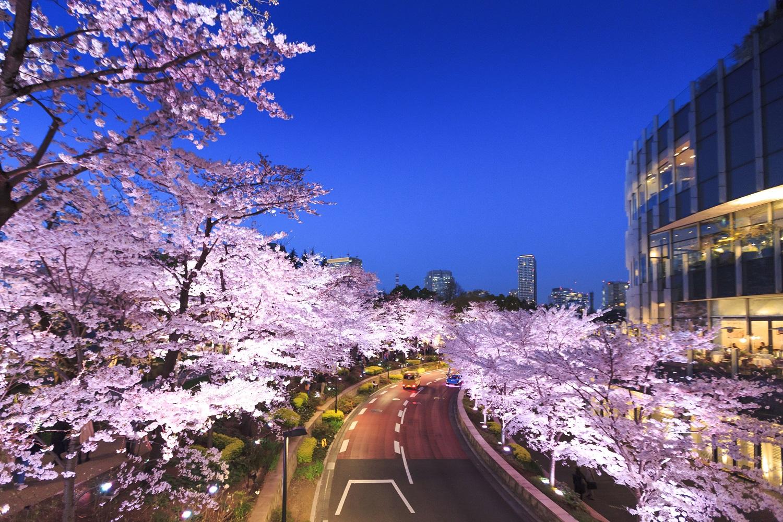 midtown blossom 2017