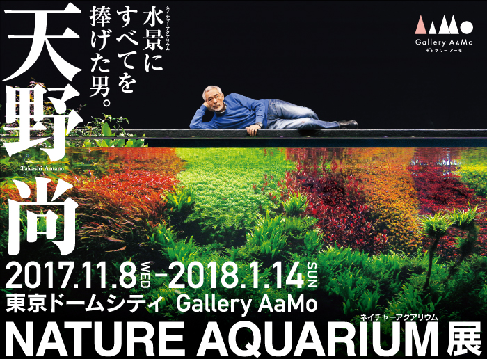 gallery-aamo-nature-aquarium-takashi-amano main