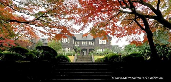 L'automne au jardin Kyu-Furukawa