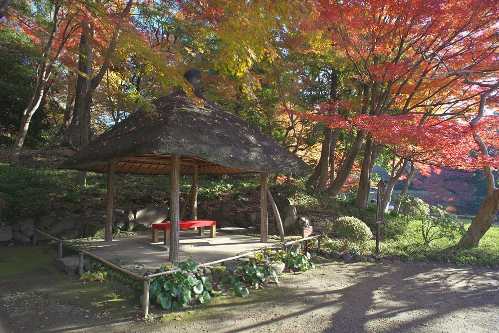 Credit photo: Tokyo Metropolitan Park Association