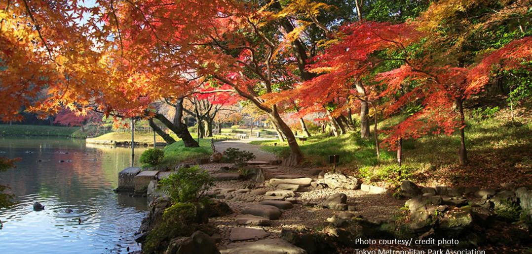 Feuilles d'automne au Jardin de Koishikawa Korakuen