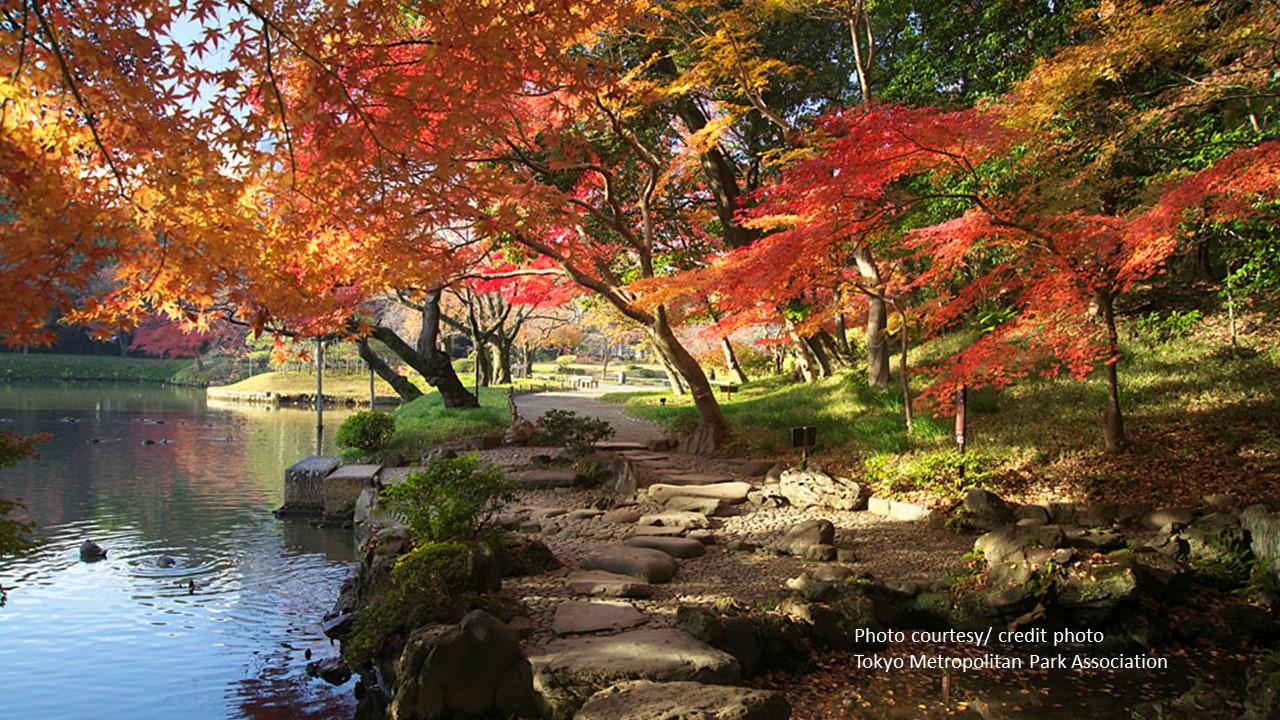 crédit photo: Tokyo Metropolitan Park Association