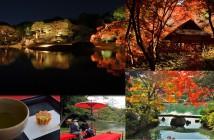 Feuilles d'automne 2018 au Jardin de Rikugi-en