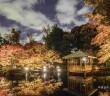 Éclairage des feuilles d'automne 2019 au Parc Otaguro