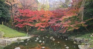 Feuilles d'automne 2019 au Koishikawa Korakuen