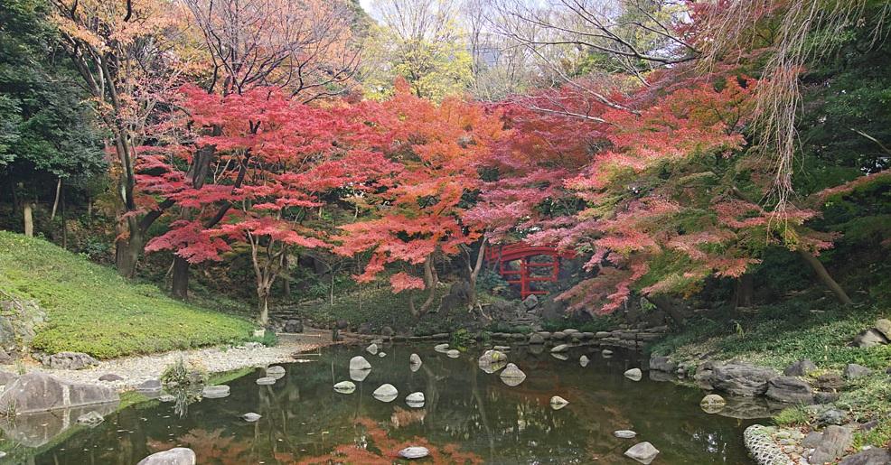 Feuilles d'automne 2018 au Jardin de Koishikawa Korakuen