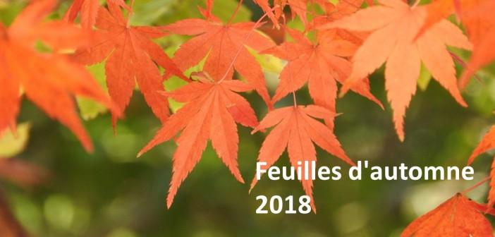 Sites et évènements des feuilles d'automne 2018 à Tokyo