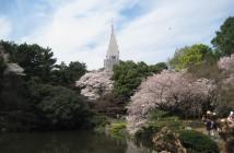 O-hanami 2019 au Jardin de Shinjuku Gyoen