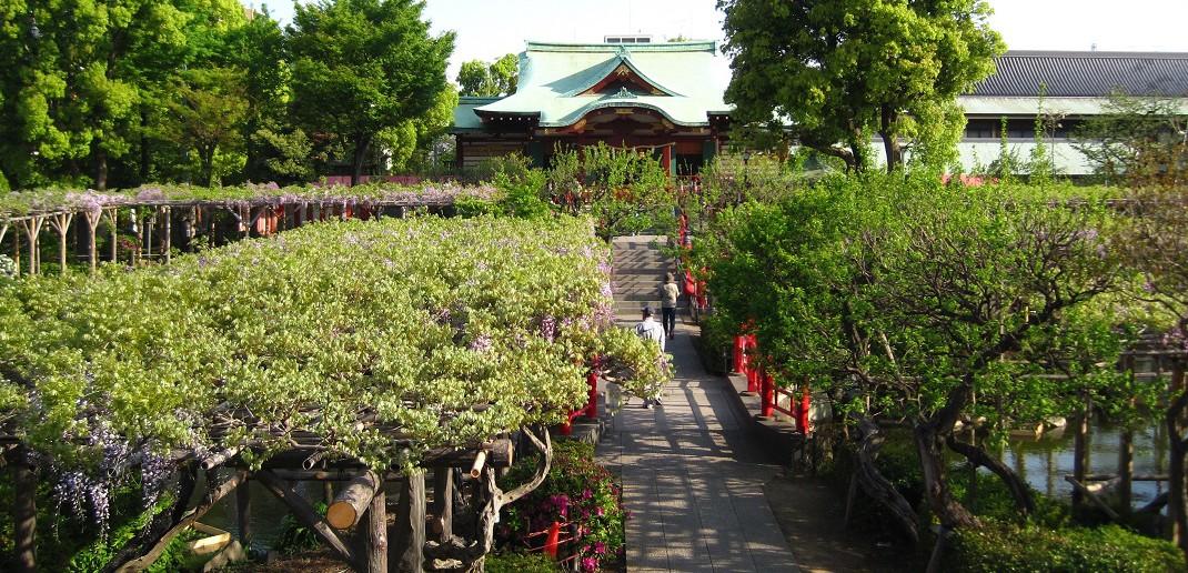 Fuji matsuri (festival de glycines japonais)