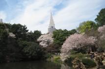 O-hanami 2020au Jardin de Shinjuku Gyoen