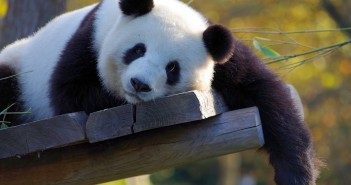 Les zoos de Tokyo en vidéo