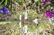 Jardins d'art au teamLab Planets Tokyo|amuzen
